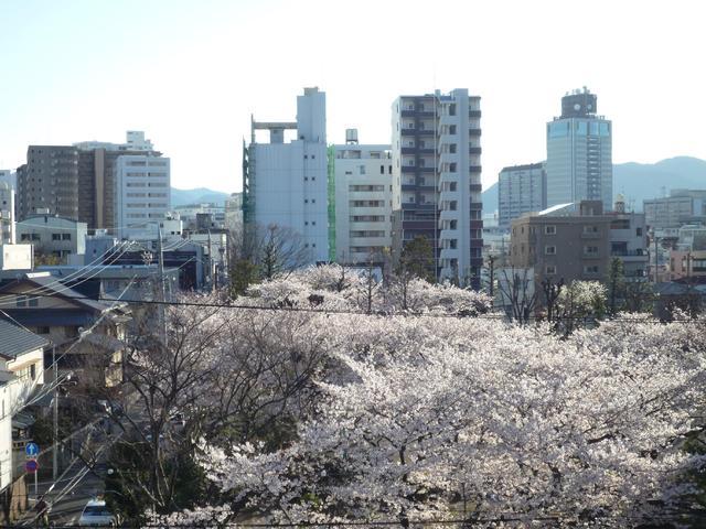 当マンション屋上から春の鷹匠公園の眺めです。